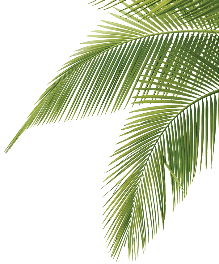 palm_fronds.png PNG Image, 709 × 853 pixels  Jungle Plants